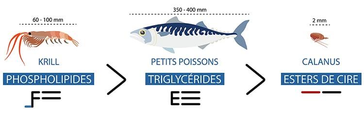 Omega-3 contenus dans l'huile de poissons, de krill et de calanus.sons