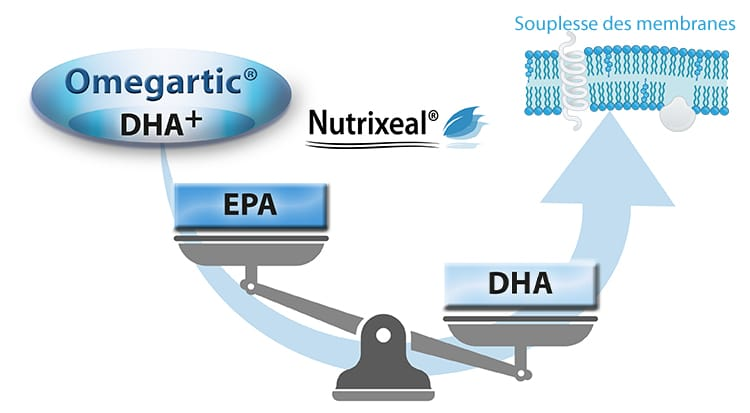omegartic dha+ omega-3 Nutrixeal Sport Info